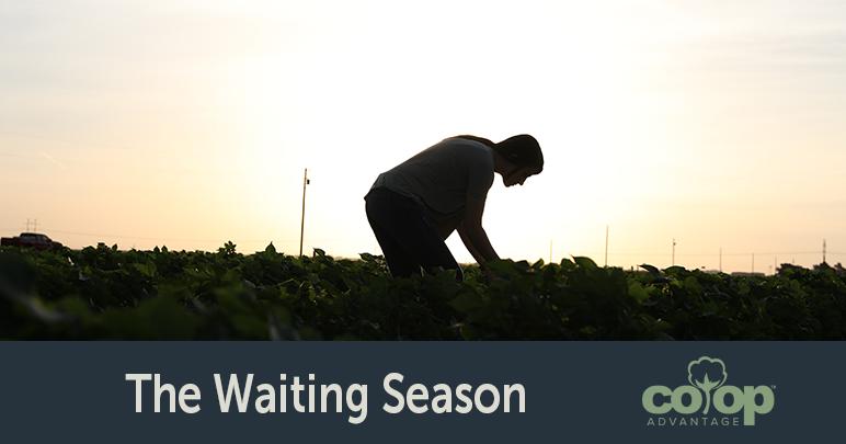 The Waiting Season